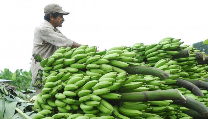 Levantar la voz por los derechos de las y los trabajadores bananeros, repercusiones internacionales.