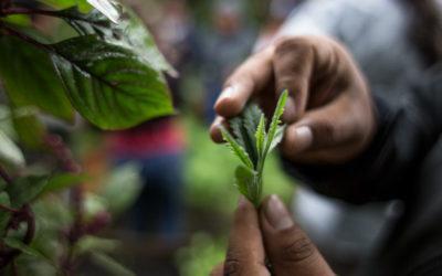 Un encuentro agroecológico marcado por el intercambio de saberes y experiencias