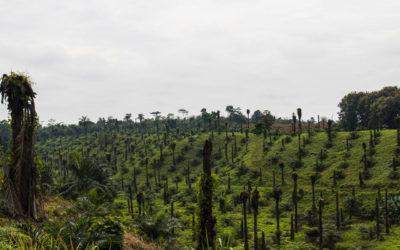 «¿El verdadero petróleo está en el agro?» El agroextractivismo como amenaza para la Soberanía Alimentaria