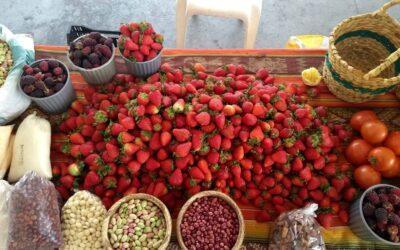 Quédate En Casa: Opciones de productos agroecológicos