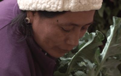 [ESPECIAL #ALTERNativxs] La alimentación durante la pandemia
