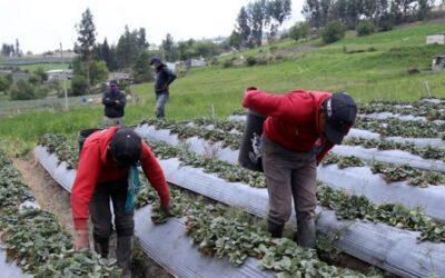 Productores aún no se recuperan de la caída de la ceniza del volcán Sangay