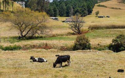 El retraso de las lluvias causa daños en los campos de la Sierra