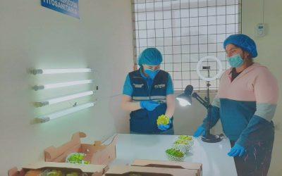 Pastaza exporta pitahaya a Hong Kong y Malasia