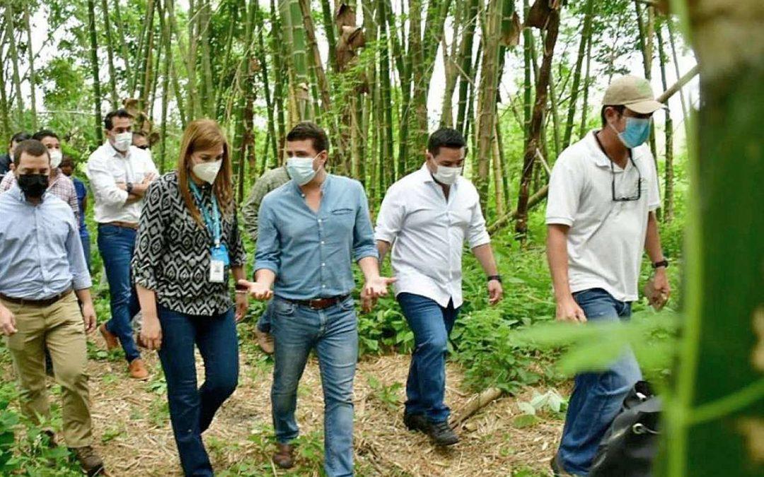 Inversión para cultivo de bambú y programas de riego parcelario se ejecutan en Manabí