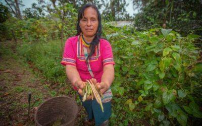 La Agricultura en Ecuador se desarrolla entre la informalidad y la subsistencia