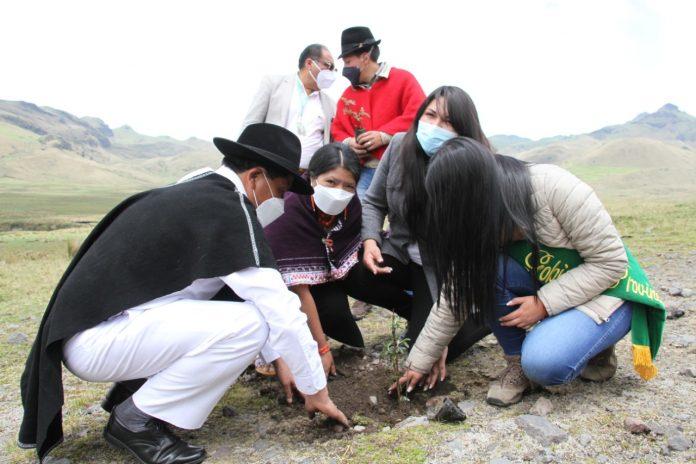 Proyecto de reforestación inició en Ambato y Píllaro