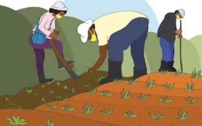 Costa Rica: Hogares productores cuentan con protocolo para prevenir y reducir contagios de Covid-19 en el sector agro