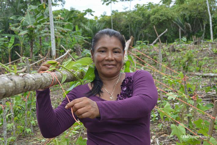 Un nuevo informe muestra que los pueblos indígenas y tribales son los «mejores guardianes» de los bosques