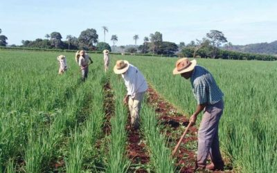 MAG hace público PLAN nacional AGROPECUARIO