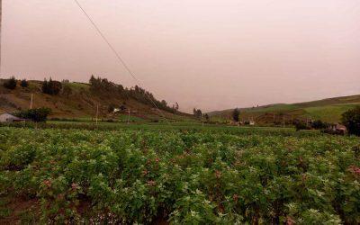 Así afecta la caída de ceniza volcánica a los cultivos