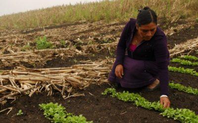 La mujer en el agro llamada a erradicar el hambre en el mundo