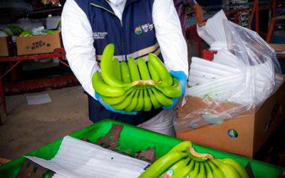 Agrocalidad se mantiene alerta por posible brote de Foc R4T en Perú