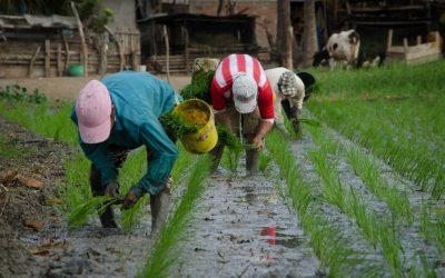 Gobierno decreta política de Estado para el sector agropecuario