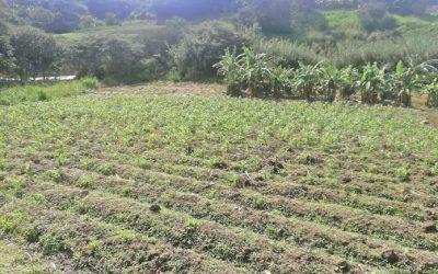 Trabajan para mejorar productividad de agricultores en Sumaypamba y Yúluc