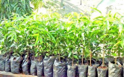 Donan plantas para agricultores