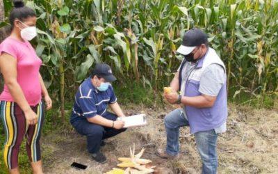 Ecuador: Entes de gobierno se unen para levantar información estadística en el agro