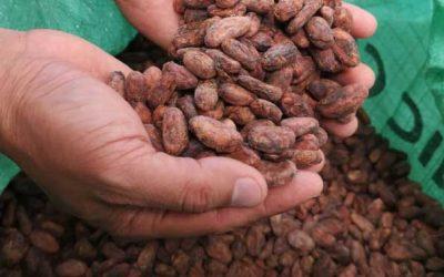 Ecuador: Pequeños productores de cacao se convierten en socios de exportadora francesa