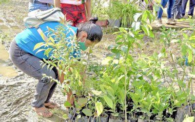Incentivan a productores con la entrega de plantas maderables y frutales