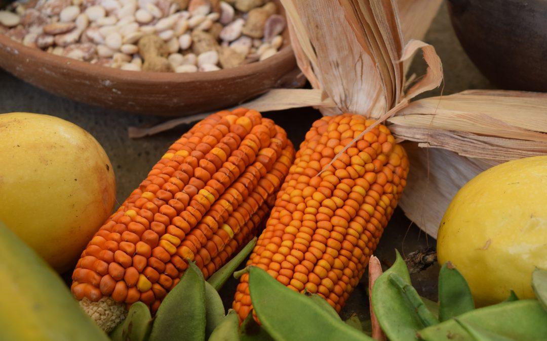 Elecciones 2021: ¿Recetas distintas y proyectos similares para el agro?