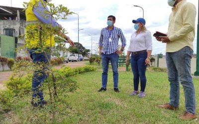 Planifican la siembra de 100 mil árboles