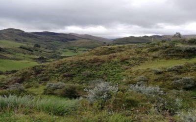 Más de siete mil hectáreas de páramos protegidos en San Fernando