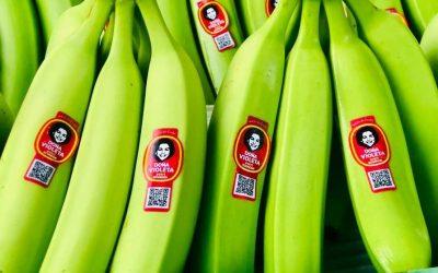 Con más de 50 marcas se vende en el exterior el banano ecuatoriano