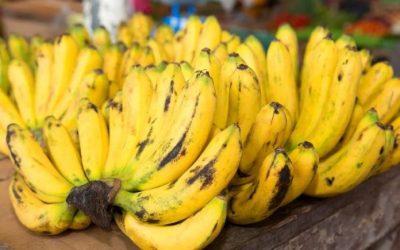 Los productores de bananas piden a la UE un modelo de responsabilidad compartida