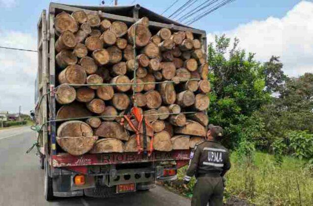 La energía eólica impulsa el mercado negro de la balsa en Ecuador