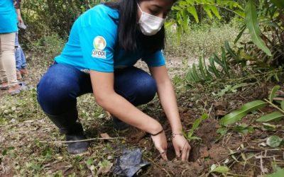 Siembran árboles de Chíparo en Sálima