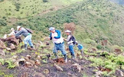 Reforestación masiva en el cantón Saraguro