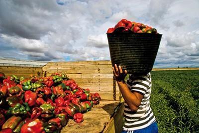 Ecuador: Durante el toque de queda toda la cadena agropecuaria podrá movilizarse
