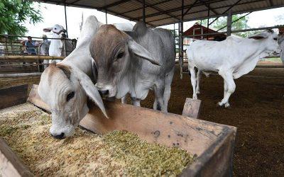 Más de 377.000 hectáreas de cultivos y 2.835 animales han sido asegurados, impulsados por incentivos estatales