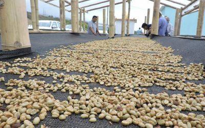 El sector cafetalero planta sus esperanzas en nuevo plan de reactivación y en recursos prometidos por Guillermo Lasso al agro