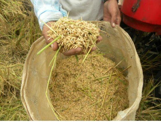 Ecuador: Productores tomarán medidas ante no fijación del precio del arroz