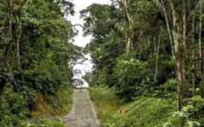 En Ecuador se liberan 29 especies en el Parque Nacional Yasuní