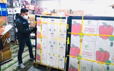 Primera exportación de pimiento ecuatoriano hacia los Estados Unidos