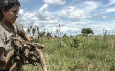 ¿Se está democratizando el acceso a tierra en Colombia?