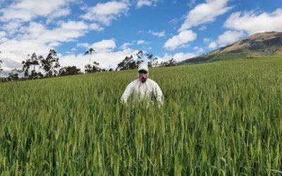 Ecuador: Aumentará el precio del pan, mas NO el del trigo a los agricultores