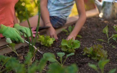 Inscripciones abiertas para cursos de agricultura urbana