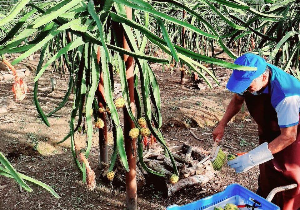 Los micro productores agrícolas son los más vulnerables a la apertura comercial