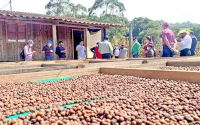 Fortalecen prácticas nutricionales en cultivo de café