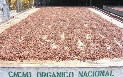 Con tan solo el 1 % de su superficie agrícola, Ecuador destaca como exportador de productos orgánicos