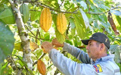 Municipio de Yantzaza promueve la investigación en materia agrícola