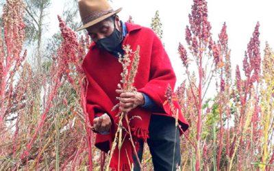 Comunidad Andina alista detalles para foro agropecuario