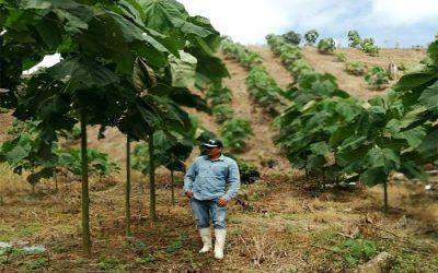 Agricultores le 'apuestan' a la boya