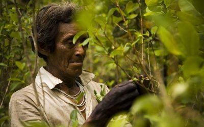 ¿Cómo salvar la biodiversidad que custodian los pueblos indígenas?