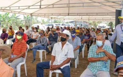 Agricultores sufren por la caída del precio del arroz