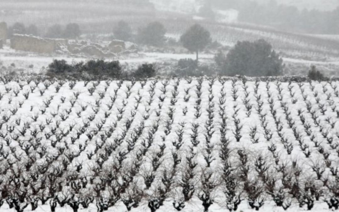 Las indemnizaciones agrícolas en España suben un 22% el primer semestre