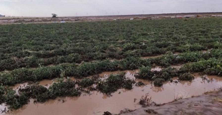 El mal tiempo daña la agricultura italiana en Apulia